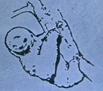 20th CO Shack Sloth