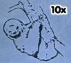 3rd CO 10x Shack Sloth